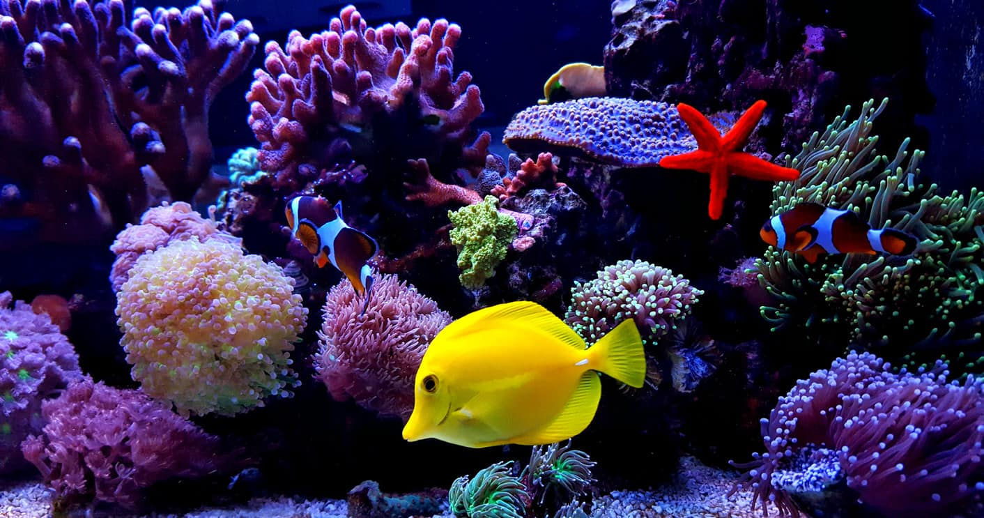 Rules About Fish Aquarium Meant To Be Broken